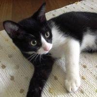 猫の気持ちは『しっぽ』『しぐさ』『鳴き声』で分かる!猫の気持ちを知る方法まとめ - NAVER まとめ