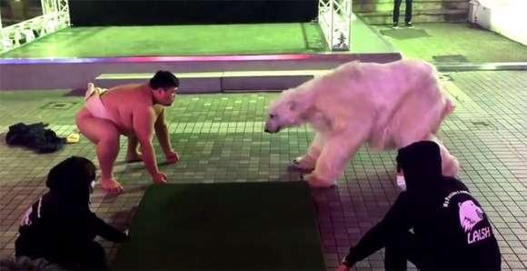 今度は新宿に白熊が出没!先日の渋谷での白熊騒動の謎がついに明らかに
