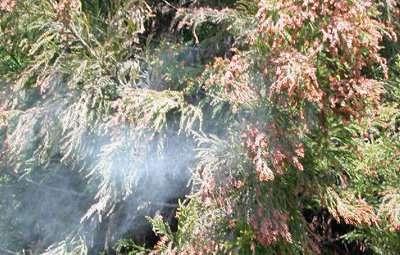 【悲報】来春の花粉は2倍近く飛散する模様 関東は花粉で真っ赤っか : はちま起稿