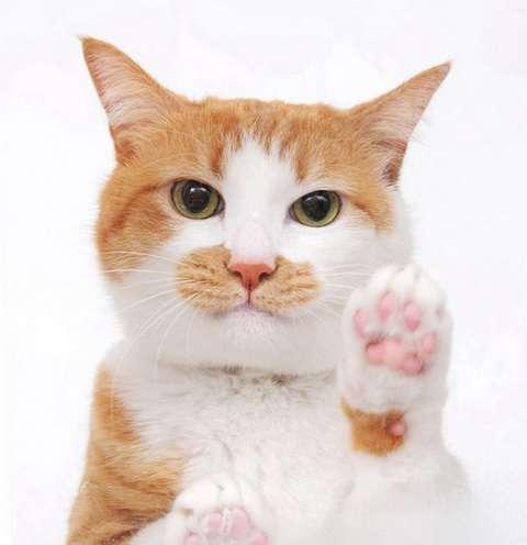 猫が出す「お前のこと好き」のサインを見逃すな!