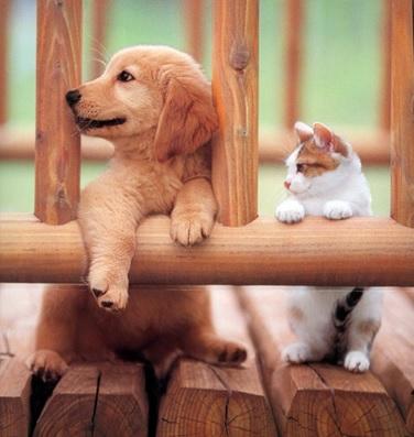 犬と猫、両方飼ってる方