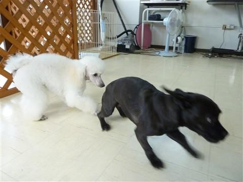DogSalon STEPのブログ 2010年09月