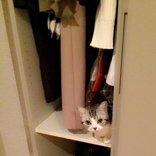 前田敦子、ペットは「猫が8匹、犬が6匹…」「知らない間にどんどん増えてる」