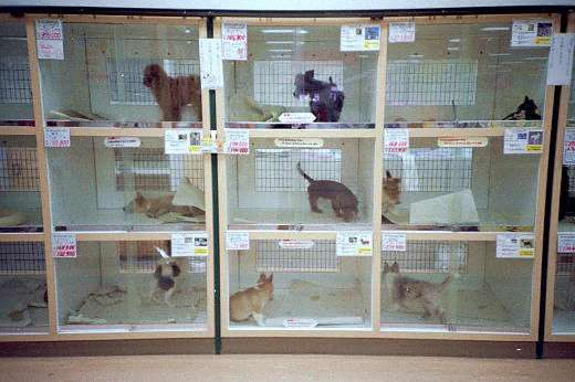 ペット業界の裏にある恐ろしい現実…「売れない犬は生きたまま冷蔵庫に」「死んだらゴミとして捨てる」