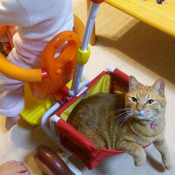 娘のために三輪車組み立てた結果www