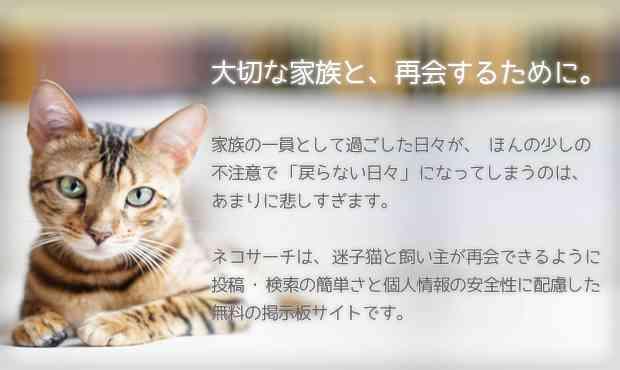 ネコサーチ | 迷子猫と保護情報の専用掲示板