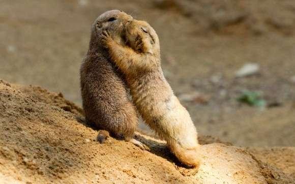 ハグのもつ偉大なるパワー!優しく抱き合うだけで心を癒す効果が証明される。相手がいない場合は妄想だけでも効果あり