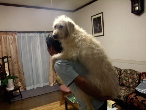 いつまで抱っこできる?大型犬の成長の凄さがよくわかる写真!