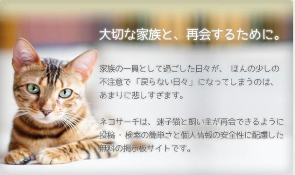 全愛猫家必見!迷子猫と保護情報専用掲示板「neko search」