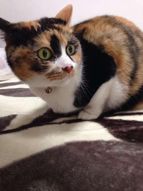 【画像】 ホットカーペットがあったかいことに気付いた顔が可愛いwww : 〓 ねこメモ 〓