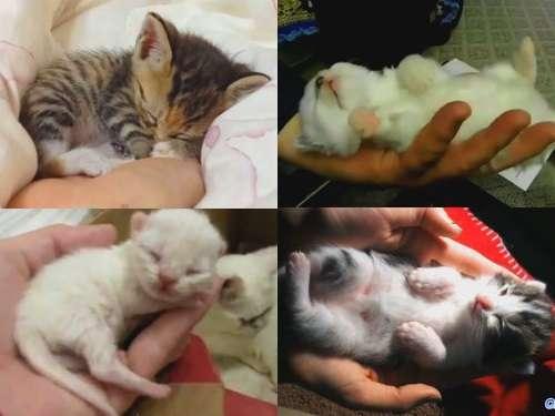 天使すぎる子猫たち…手のひらの上でスヤスヤ眠る特集(動画):らばQ
