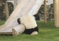 頭から落下 : ドジでマヌケな動物の失敗シーン画像集 - NAVER まとめ