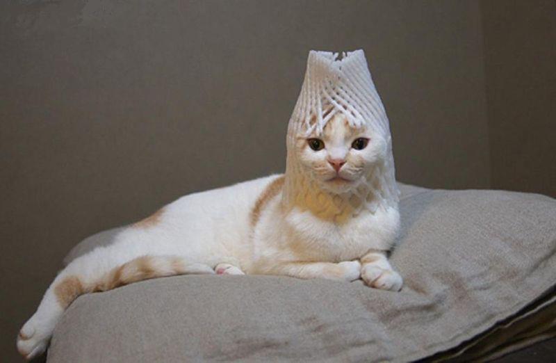 猫を飼うと健康になる!科学的に証明された猫がもたらす驚きの健康効果とは?