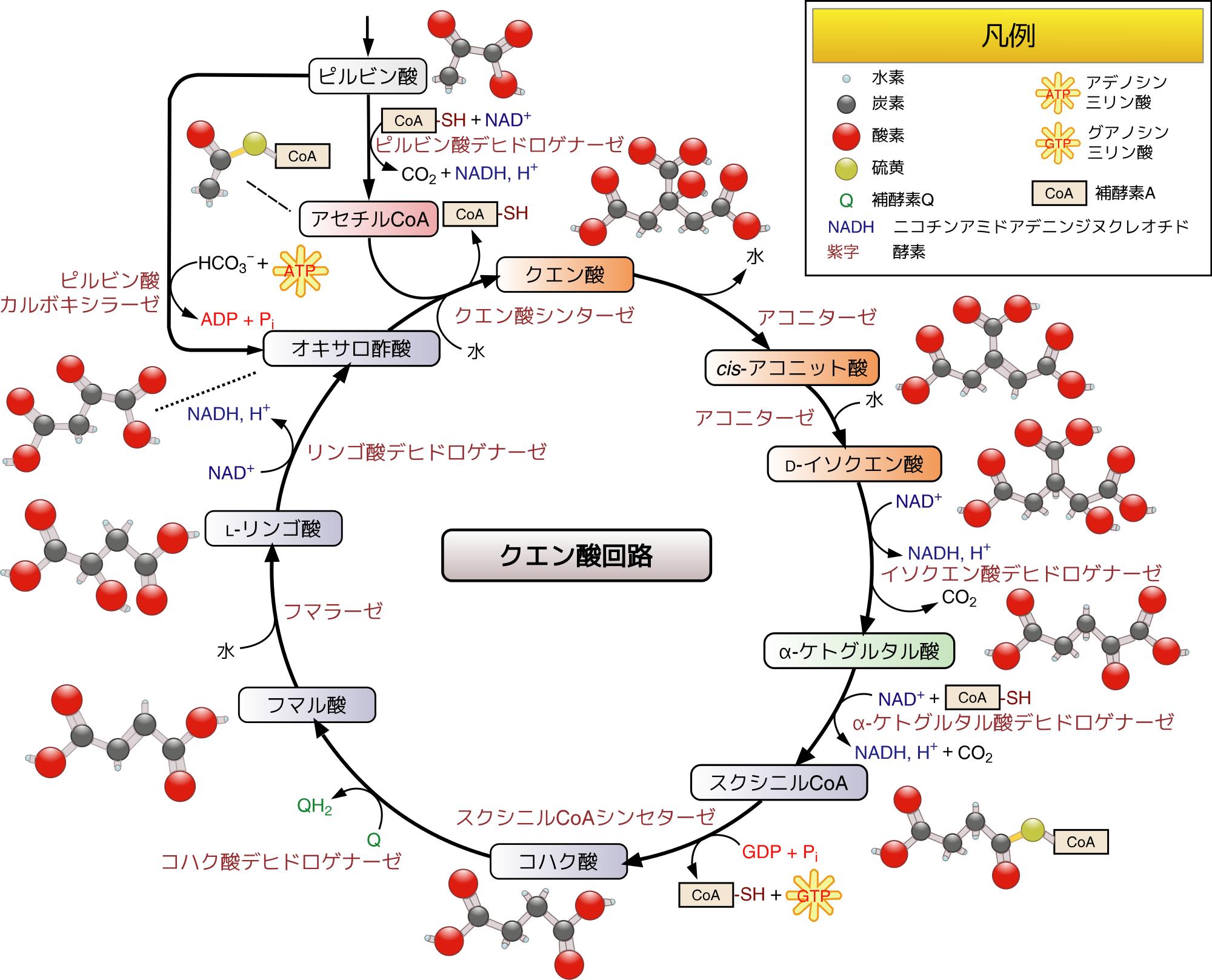 クエン酸活用法
