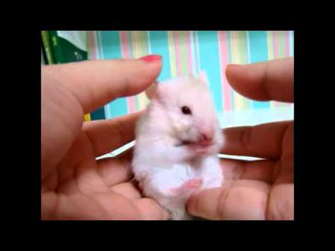 Surprised!!! A very cute hamster... - YouTube