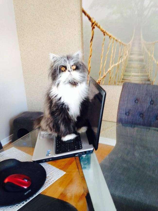 ものすごく犬っぽい猫が発見されるwwwwww:ハムスター速報