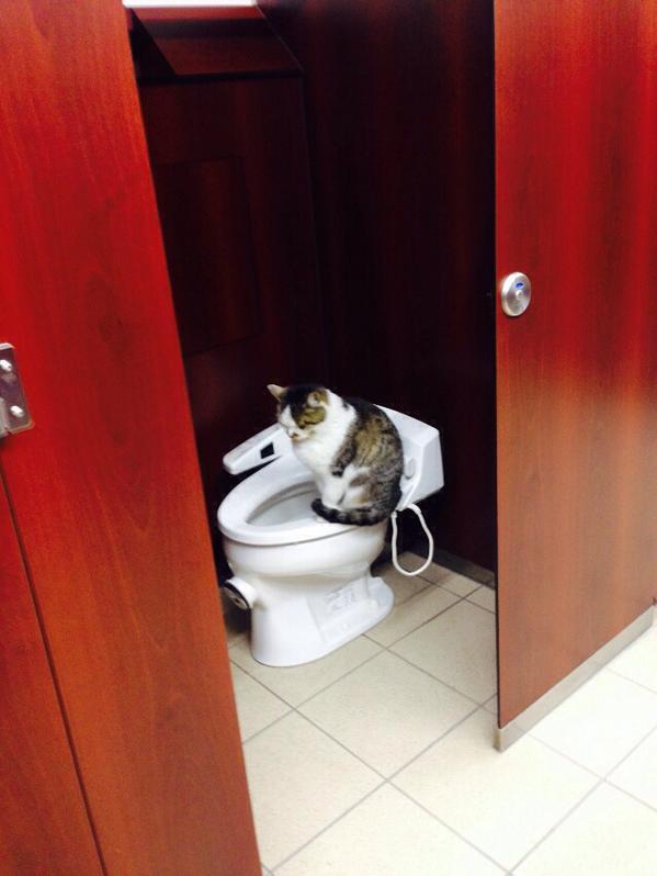 """大混雑の女子トイレ。一つのトイレだけ誰も使おうとしない""""その理由""""が強烈な癒しだった…"""