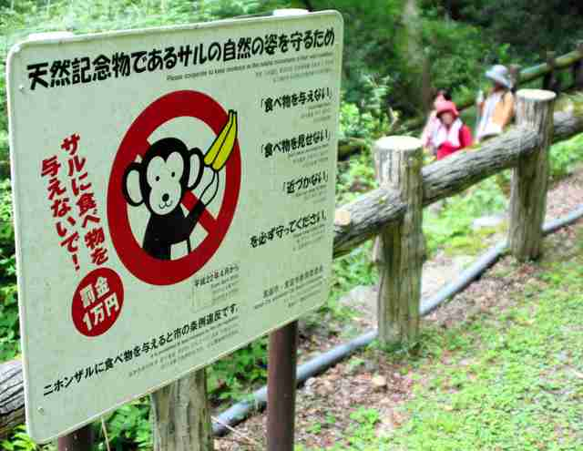大阪)箕面山のサル減少 エサやり禁止条例4年:朝日新聞デジタル