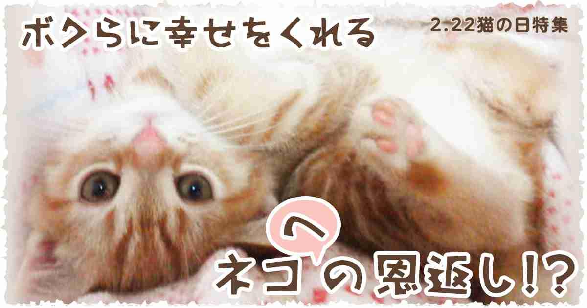 2.22猫の日特集 - Yahoo!ネット募金