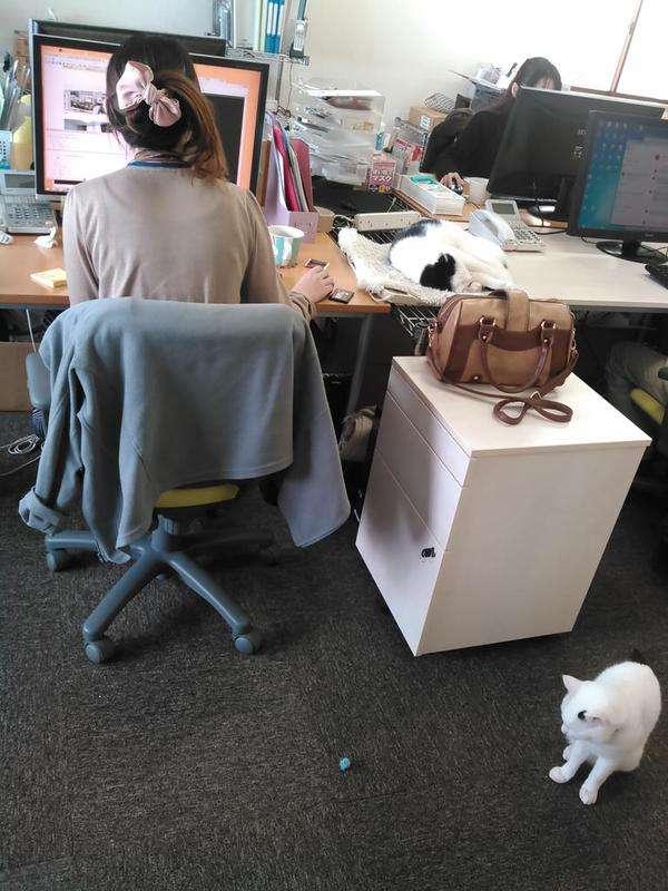 猫のいるIT企業の職場環境が和む!こんな職場で働きたいw