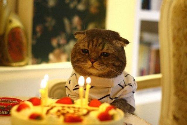 誕生日祝いをしない人、いませんか~?