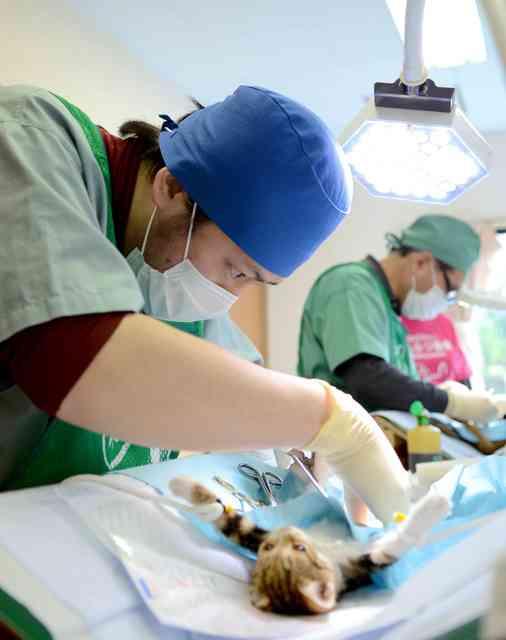 島の猫3千匹を不妊去勢へ 希少ウサギ守るため 徳之島:朝日新聞デジタル