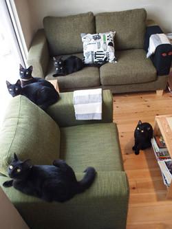 【猫の日】「好きな猫の種類」2位は「日本猫」、1位は意外な「○○」!