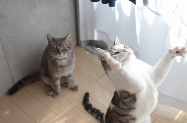 猫にも運動オンチがいることがよく分かる画像www