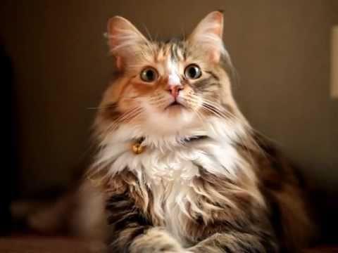 夕立ちに驚く猫 - YouTube