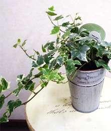 植物をうまく育てられない方