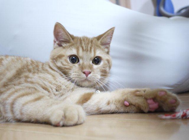 【ぐうかわ】 ネコだって歯磨きした方がいいよ → されるがままのネコが天使すぎる・・・ : オレ的ゲーム速報@刃