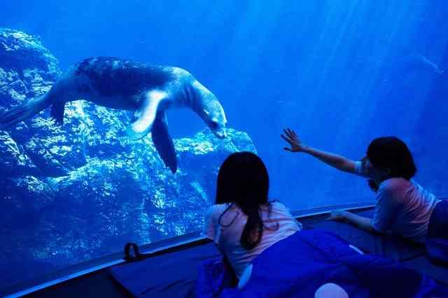 マツコ・デラックスが話題の水族館女子会をバッサリ否定 「絶対幸せになれない」