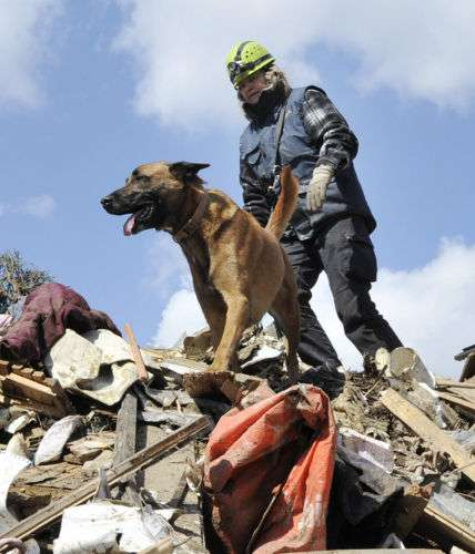 徳島県、動物愛護センターの収容犬を災害救助犬に育てる取り組みを発表 全国初