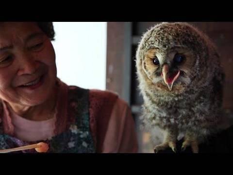 フクロウ「里親」はおばあちゃん ヒナ育て放鳥20年 - YouTube
