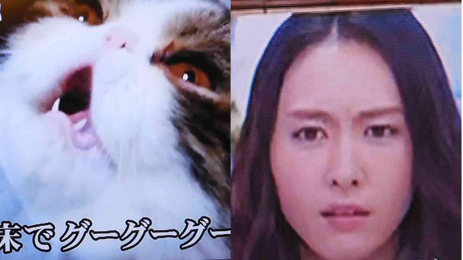 歌う猫ドラミちゃん テレビ出演で ガッキーの笑顔が引きつりまくる!! - YouTube