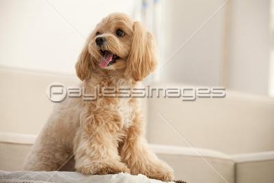 【画像】「ダックスフンド」と「ピットブル」のミックス犬が何とも言えない外見