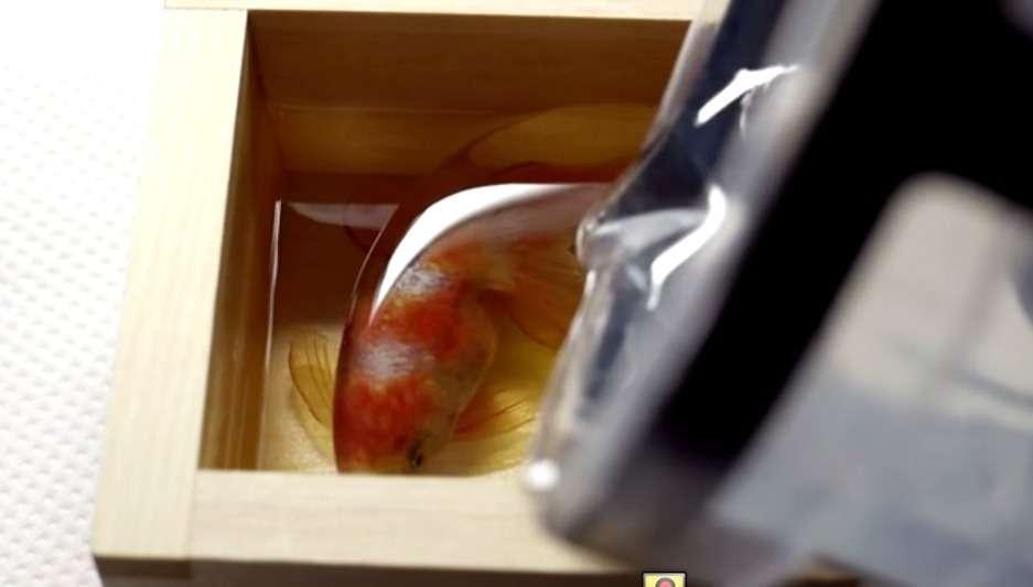14年間金魚だけを描き続ける男・深堀隆介。独自技法から生み出される驚きの作品とは
