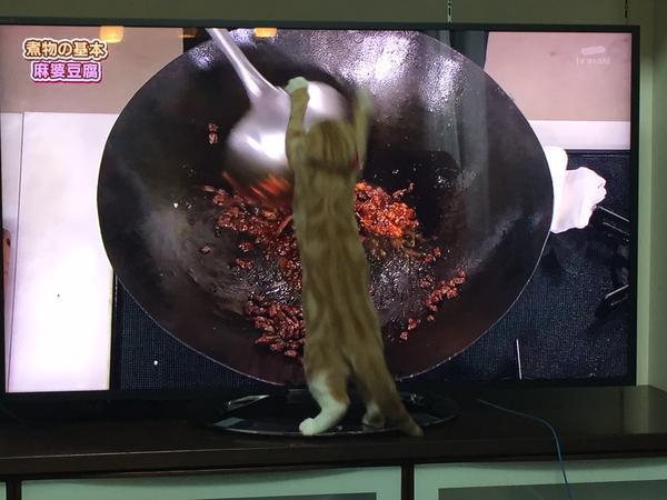 【悲報】猫、オタマに大興奮して炒められる……(閲覧注意でない):ハムスター速報