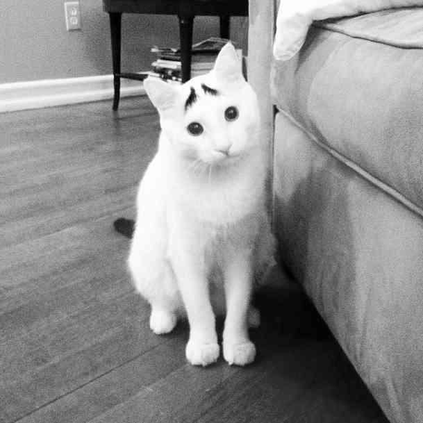 100円のつけまつげを猫の額にのせると途端に猫の表情が豊かに