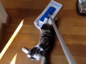 掃除するニャ 床をせっせと拭くネコちゃんがかわいい
