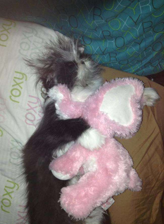 ものすごく犬っぽい猫が発見される
