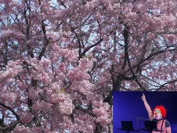 卒業式で流れるドラゲナイ【合唱曲風にしてみた】 ‐ ニコニコ動画:GINZA