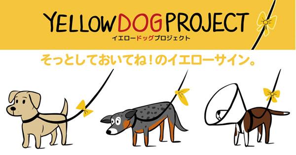 黄色いリボンの犬がいたら、そっと見守ろう「イエロードッグプロジェクト」  –  grape -「心」に響く動画メディア