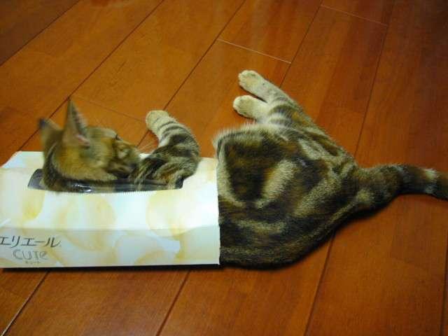 猫缶型の爪研ぎ 列が出来るほど好評だと話題に