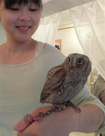 """""""癒やし鳥""""フクロウ 触れ合える場が続々開店「飼った気分になれる」 (産経新聞) - Yahoo!ニュース"""