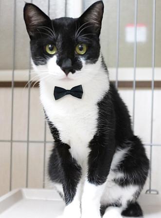初めて猫を飼うのにオススメ商品、本など教えてください