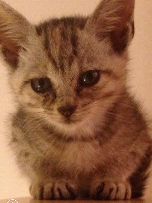 猫の予防接種受けてますか?
