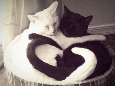 黒と白、貴方に似合うのはどっち?