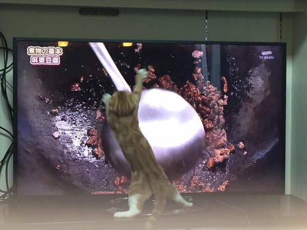 オタマに大興奮した猫が可愛い