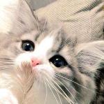 生まれて初めて羽をみた子猫の反応が可愛い